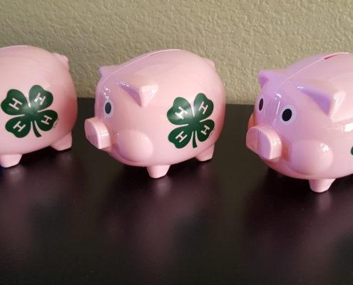 3 4h Pigs