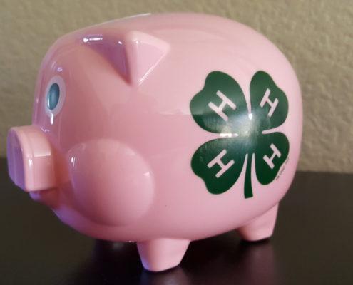 4h Pig