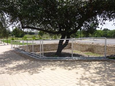 Fenced Tree