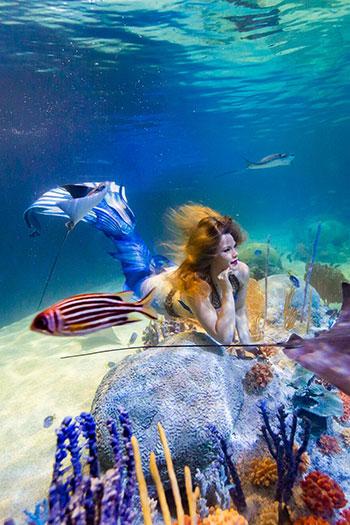 Mermaid Thalia
