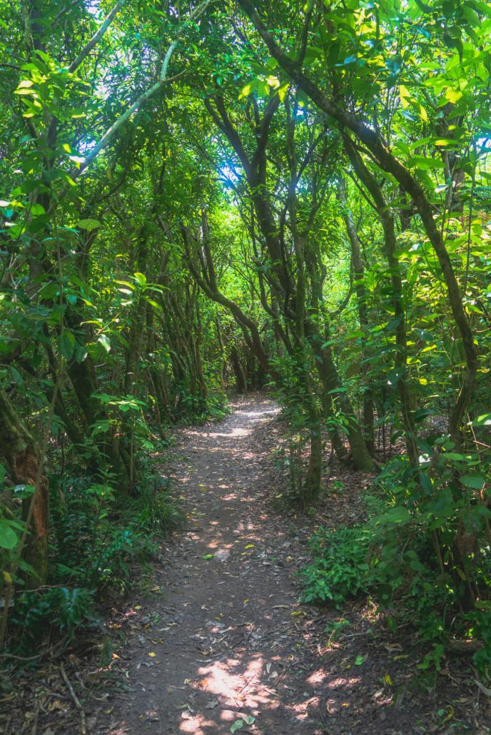 An Empty Trail