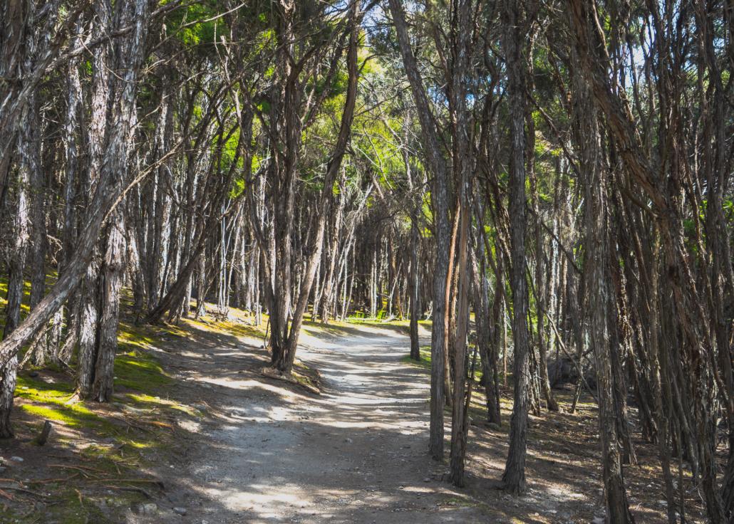 Barren Hiking Trail